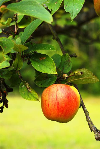 culturelab newton s apple the real story