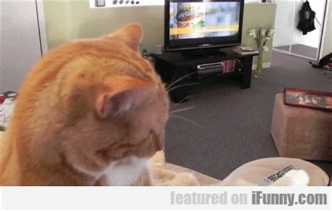 funny couch potato pictures viral fun pics august 2015