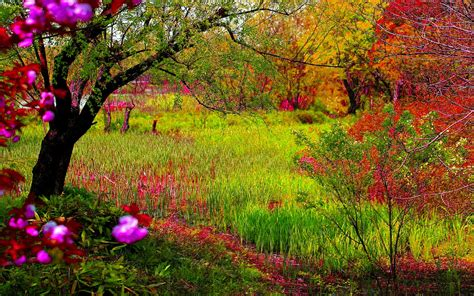 imagenes de paisajes naturales hermosos imgenes de paisajes fotos bonitas imagenes bonitas
