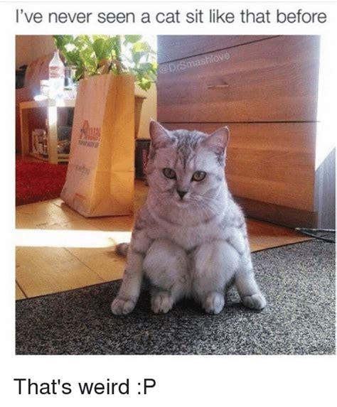 Cat Sitting Meme - 25 best memes about cat sitting cat sitting memes