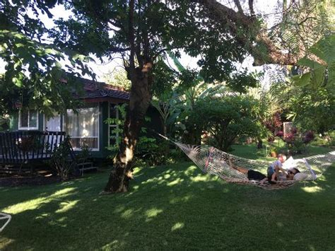 nona cottages coconut tree in front of cottage picture of nona cottages kihei tripadvisor