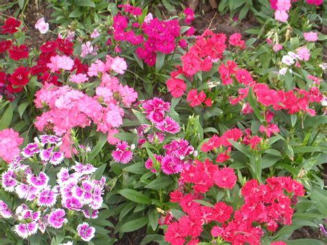 baby huggables flower gardens