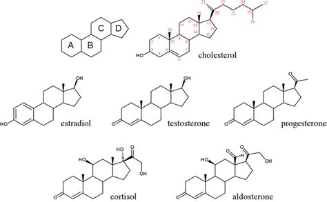 carbohydrates testosterone steroids chemistry biomolecules and enzymes review