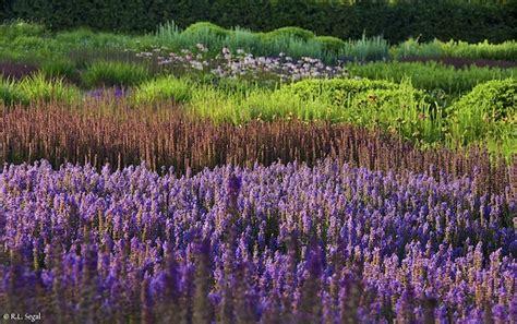 garden design s new perennial movement