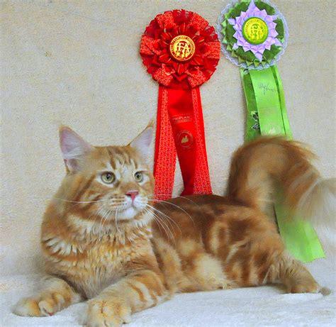 Vitamin Untuk Anak Kucing pecintakucing obat kucing