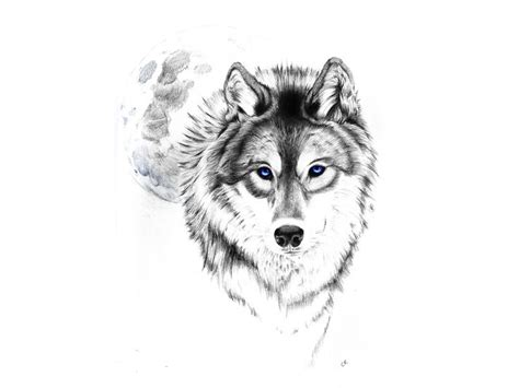 feminine wolf tattoo 25 best ideas about small wolf on wolf