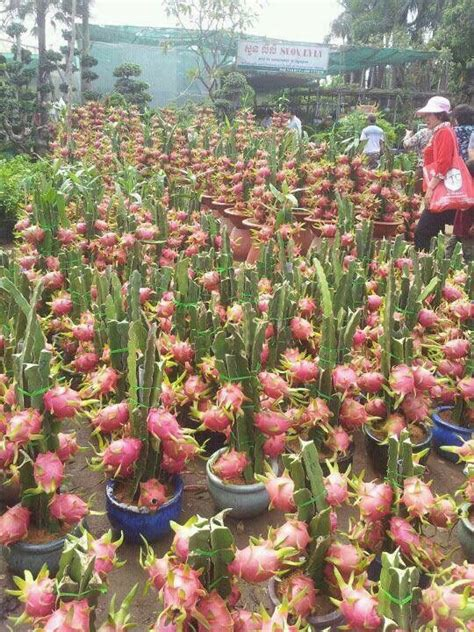 fruit tree nursery new york 8 best images about plant on