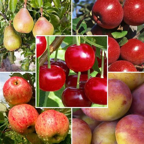 mixed fruit mixed fruit orchard discounted orchard pack apples