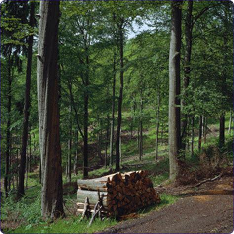 Entreposer Bois De Chauffage 4736 chauffage au bois entreposer le bois de chauffage