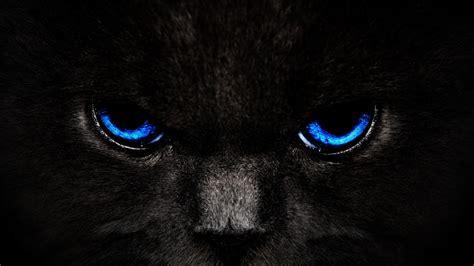 black kitten hd wallpaper black cats hd wallpapers wallpaper202
