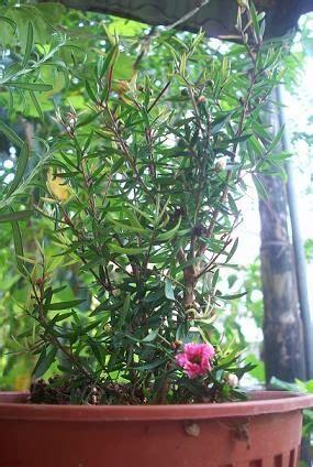 Benih Bunga Untuk Dijual jualan benih tanaman semua menjadi pokok bunga