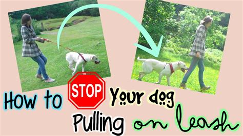 how to stop from pulling on leash how to stop your pulling on leash hacks