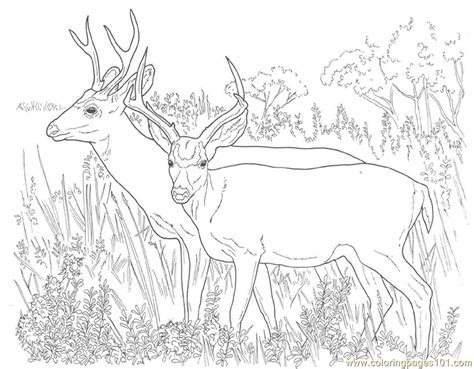 deer fighting coloring pages buck deer fighting coloring coloring pages