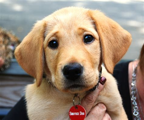 you puppies i you puppy pictures www pixshark images galleries with a bite