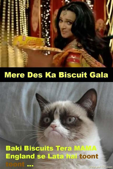 mere cat meme 100 images backchod billi latest