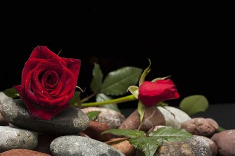 Dibalik Investigasi Tempo 02 6 kisah seputar hari mengapa ada bunga mawar