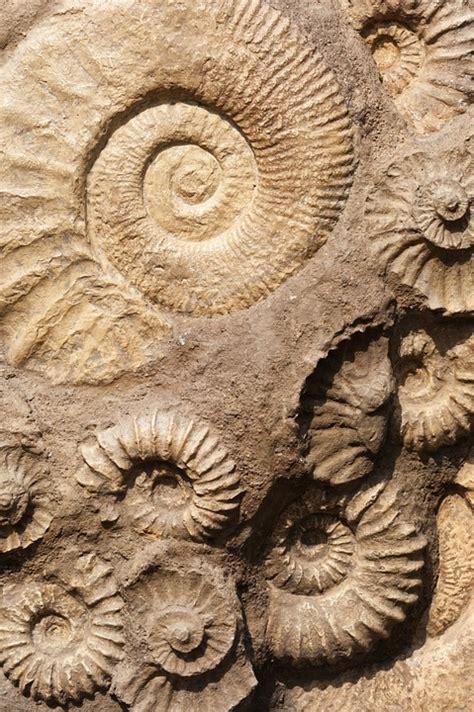 shell fossil   photo  pixabay