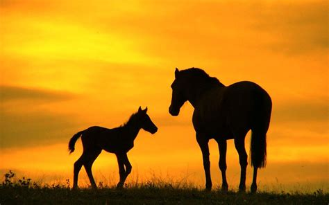 nice hourse horse backgrounds wallpaper cave