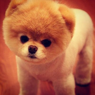 puppies that look like bears 15 dogs that don t look like dogs