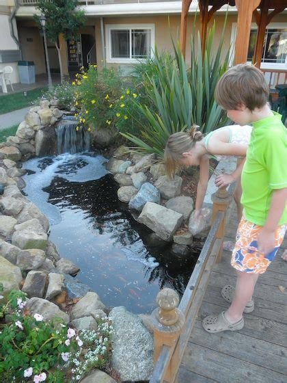Best 25  Goldfish pond ideas on Pinterest   Pond fountains