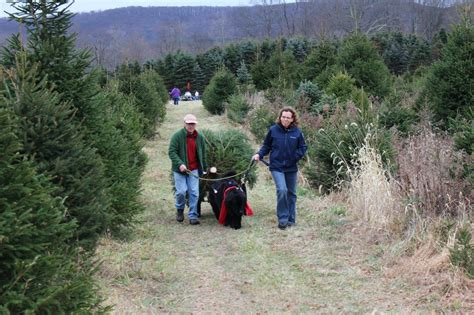 best 28 tree farms in chester county pa best 28 tree farms in chester