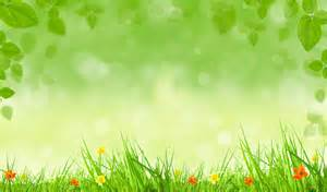 flowers green leaves spring background hd picture