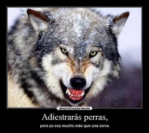 imagenes de lobos llorando im 225 genes y carteles de loba pag 5 desmotivaciones