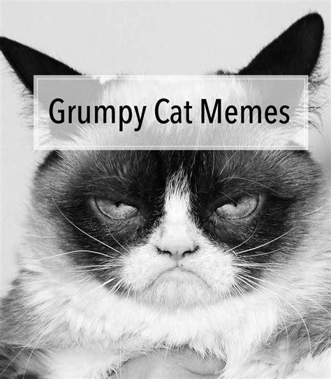 Omg Cat Meme - grumpy cat memes omg amino