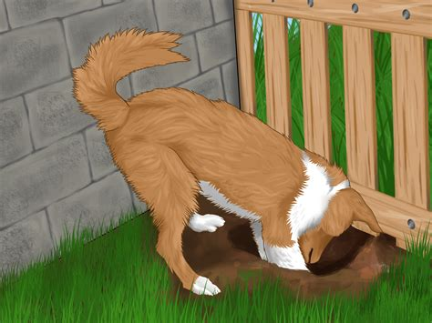 dog in the backyard 3 ways to stop your dog from running out of the backyard