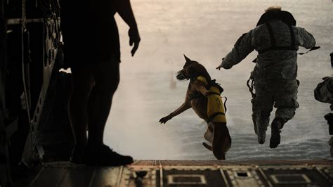 war dogs 26 awesome photos of war dogs showing how badass and