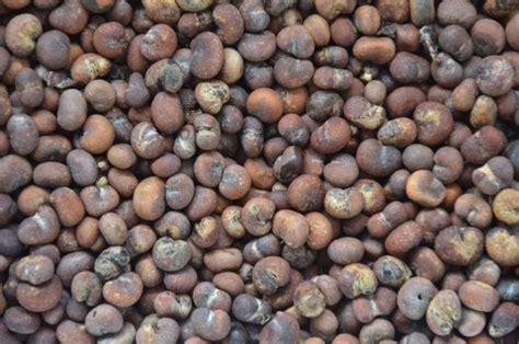 baobab fruit baobab seed is baobab adansonia digitata feedipedia