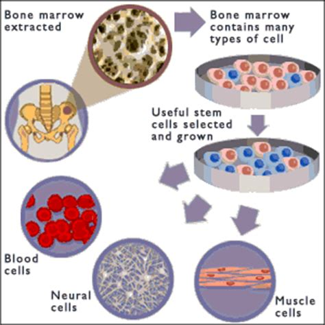 stem cell treatment now stem cell treatment now some alternative uncategorized pondok ilmu page 2