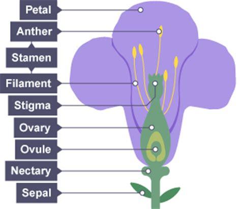 plant reproduction diagram bitesize ks3 biology plant reproduction revision 1