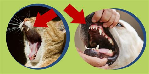 why are puppy teeth so sharp feeders why are you feeding your dogs like cats dogs naturally magazine