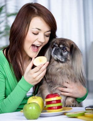 is milk bad for dogs best 25 food for dogs ideas on
