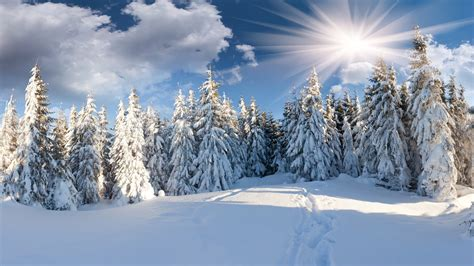1920x1080 path winter snow christmas tree forest the