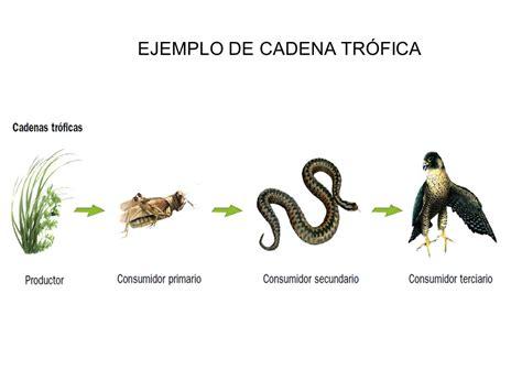 cadenas alimenticias ejemplos con dibujos los ecosistemas ccnn 2 186 eso mar 237 a gin 233 s ppt video