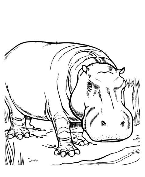 imagenes para colorear hipopotamo hipop 243 tamos en dibujos im 225 genes y fotos