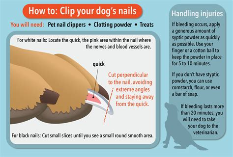 how often to cut dogs nails how often can i trim my s nails best nails 2018