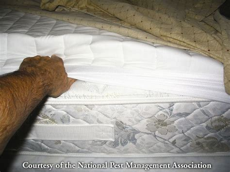 how to search for bed bugs traveling this weekend be sure to check hotel and motel