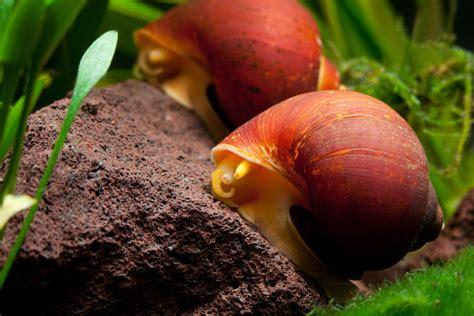 alimentazione lumache di terra lumache a rischio acqua dolce ecosistemi e