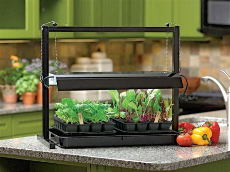 homegrown flavor   indoor garden  van horn advocate