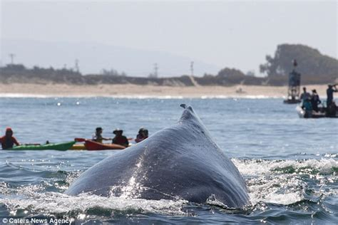 whale lands on boat british holidaymakers lucky to be alive after humpback