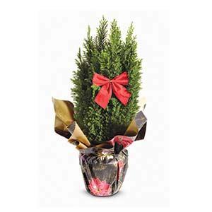 912324 chistmas tree 6inch pot
