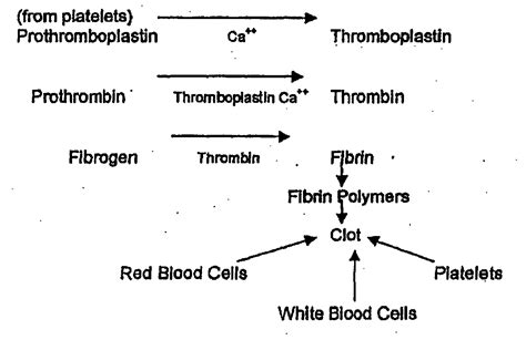 mechanism of blood clotting flowchart blood clotting mechanism diagram related keywords blood