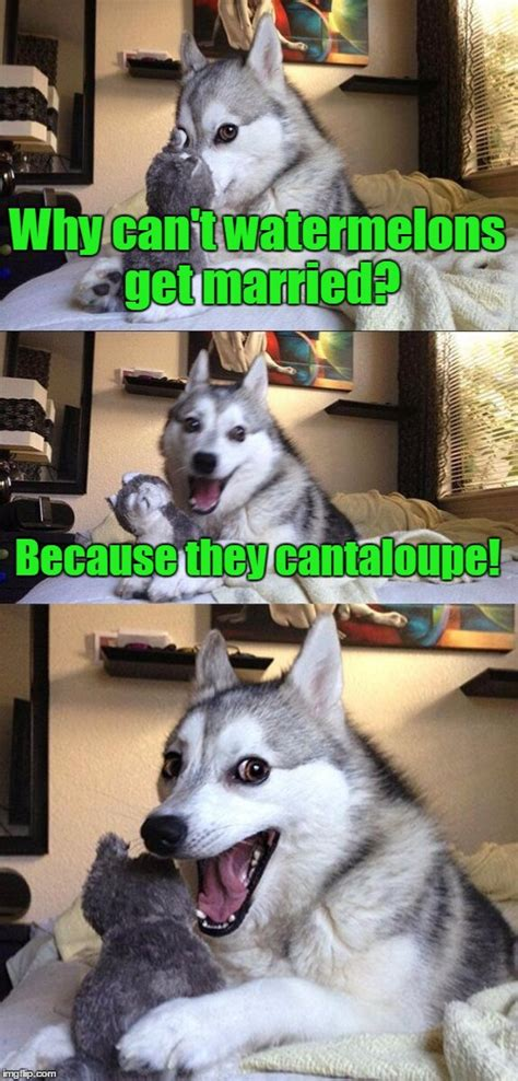 is cantaloupe bad for dogs a classic pun imgflip