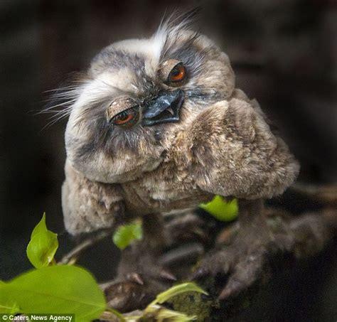 killer owl like owl dolls fly the shelf for up to