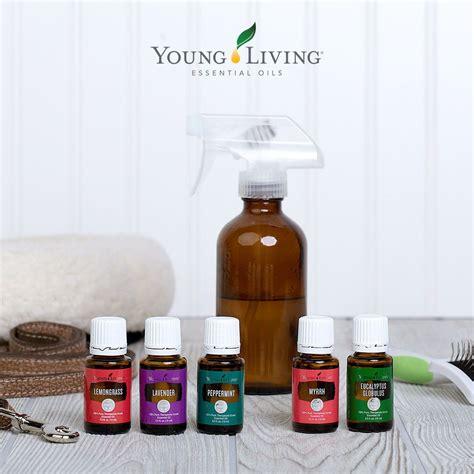 diy pet stain odor remover diys essential oils