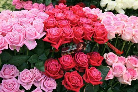 Dress Merah Bunga Mawar wp images pink post 7