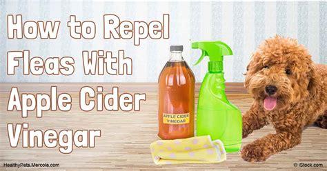 apple cider vinegar for fleas on dogs apple cider vinegar for cats fleas cats